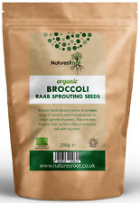 Organic Broccoli Sprouting Seeds-Superfood | non OGM | microgreen Sprouts
