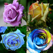 Seeds Rose Flower Mixed Peony Style Rare Plants Decor Multi Colors Garden 100Pcs