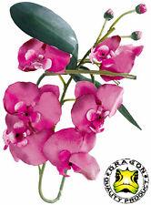 Dragon Orchideenzweig mit Blüten bordeaux-rot Deko Pflanze Terrarien Reptilien