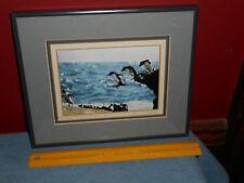 Falkland Islands PENGUINS Photography Signed Original ROCKHOPPER Penguin Framed