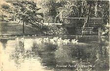 Ducks in Provost Pond, Caldwell NJ 1912