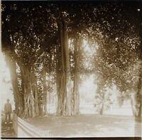 Viaggio IN Egitto Cairo Giardino Albero Placca Da Lente Stereo Vintage