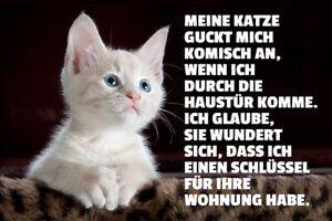 Katze guckt komisch Blechschild Schild gewölbt Metal Tin Sign 20 x 30 cm W0189
