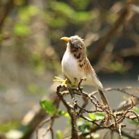 1 X Fake Artificial Feathered Bird Realistic Garden Home Decor Taxidermy #1