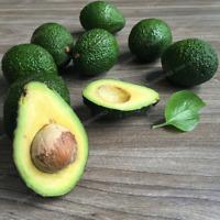 Avocado Bonsai Fruit Delicious Persea Mill Pear Garden Plants 10 Pcs Seeds NEW H