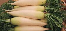 RADISH 'Japanese Daikon' 60+ seeds asian vegetable garden EASY TO GROW Minowase