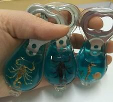 3 pcs insect scorpion dragon haima blue Beer Bottle Opener NG10