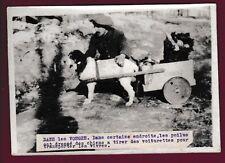 PHOTO PRESSE 150215 - LES VOSGES Poilu dressage attelage de chien chasseur alpin