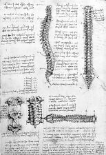 Leonardo Da Vinci Aspects of the Vertebral Column  Anatomy Poster Print Art