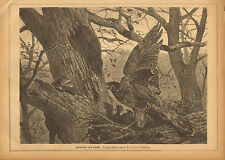 Eagle Nest, Threatened By Weasel, German, Vintage, 1876 Antique Art Print,