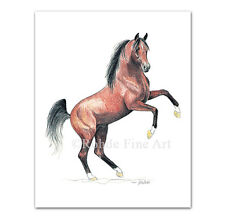 *Bask+ - famous Arabian Horse Art equine painting signed Rohde - Nice!