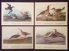 1942 Vintage AUDUBON LOT #2 of 4 RED BIRDS INSTANT DECOR Art Print Lithographs