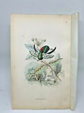 DELUXE ED Hand-colored Plates 1840 Jardine History Hummingbirds #12 Gould's