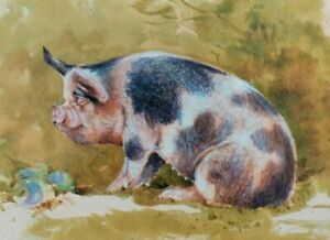*  CROSSBRED MIDDLE WHITE PIG  * PRINT OF A PAINTING BY BENINGFIELD