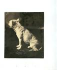 Dog; ca1854