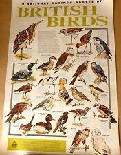 National Sabings British Birds  VINTAGE PUBLIC INFORMATION 1977 ART POSTER