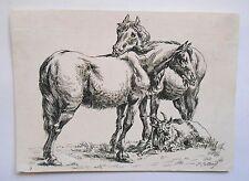Eau forte originale - Paulus Potter - Deux chevaux et une chevre - XVIIème