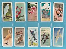 BIRDS - BROOKE BOND CANADA - SCARCE  SET  OF  48  TROPICAL  BIRDS   CARDS - 1964