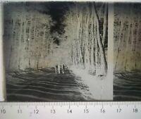 EE024 Plaque négatif verre stéréoscopique circa 1920 6x4cm promenade en foret