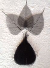 25 Black Po Bo Banyan leaves skeleton leaf see through Halloween crafts Medium