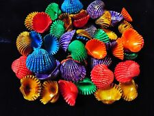 """1/2 POUND OF 1 to 1-1/2"""" DYED ARK SEA SHELLS, BEACH DECOR CRAFT TROPICAL"""