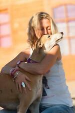 Please Microchip a Rescue Galgo (Spanish Greyhound) at 112 Carlota Galgos