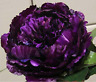 1 Peony Roots Flower Plants Perennial Rhizome  Easy care Fragrant Gift Resistant