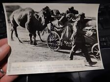 camel dromedary   military photograph German Press WW2 Authentic  B