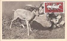 Maximum Card Maximumkarte Germany DDR Deutschland 1964 (29) horned animal zoo