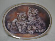 Sammelteller - Liebenswerte Katzenkinder - Mitterteich - Komm spiel mit uns !