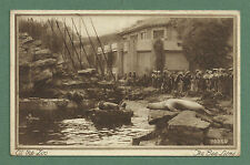 c1930's POSTCARD AT THE ZOO - THE SEA LIONS  PUB. BY PHOTOCHROM CO. LTD