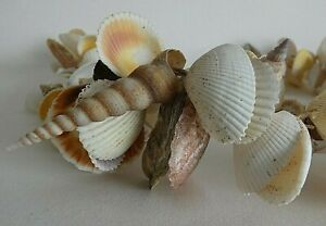 Large Mixed Shell Garland  - 104cm