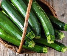 20+Dark Green Zucchini Squash Seeds Courgette Italian Zucchino Vegetable USA