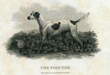 C.1801 POINTER DOG COPPER ENGRAVING BY JOHN SCOTT, BUNNY & GOLD LONDON