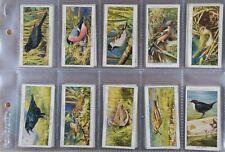 John Player & Sons Wild Birds 1932 Cigarette Cards complete set of 50