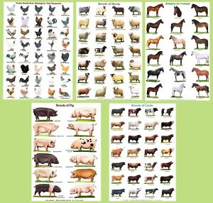 POSTERS A4 size...CATTLE, SHEEP, PIGS, POULTRY, DUCKS, TRACTORS, HORSES, GOATS,