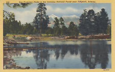 Postcard Curteich A577 San Francisco Peaks Coconino National Forest Flagstaff Az