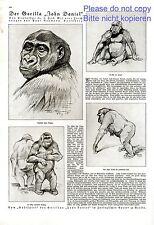 Der Gorilla John Daniel 1 Seite Bericht von 1925 Zoologischer Garten Berlin Affe