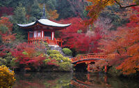 Framed Print - Autumn Japanese/Oriental Garden (Picture Poster Art River Bridge)