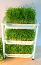 Tribest Sproutman's Soil-Free Wheatgrass Grower Sprouter Tray System
