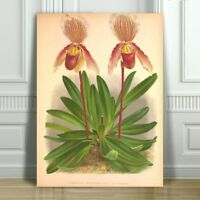 JEAN LINDEN - Beautiful Pink & Yellow Orchid #43 - CANVAS PRINT POSTER - 36x24""