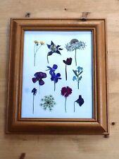 Real Pressed Flower 'Sampler' in a wooden frame. Botanical frame.