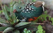 FEATHERED BIRD - Multi Color/Green - Decorative Crafts
