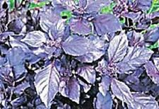 "Herb Basil Purple ""Dark Opal"" Approx 700 Seeds 1g"