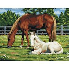 """HORSES IN FIELD Acrylic Paint By Number Kit Artist Canvas Series 11""""X14"""""""