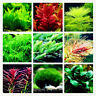 A Bag Of 100 Mix Plant Seeds Aquarium Fish Tank Aquatic Random Water Grass Decor