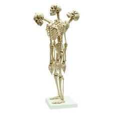 Rüdiger Anatonie Mini-Skelett mit flexibler Wirbelsäule (MI200.2)