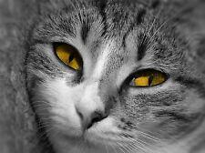 CAT PORTRAIT BLACK WHITE YELLOW EYES PHOTO ART PRINT POSTER PICTURE BMP049A