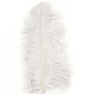 """Ostrich Wing Feather Plumes 50-55cm (20-22"""") - Ivory ((SECONDS))"""