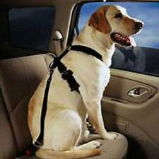 Pet Seat Belt Large Dog
